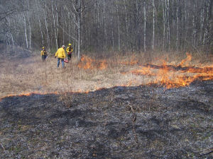 Controlled burn of native grasses on Cameron Mills SF.