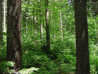 photo of densely treed forest