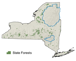 A map of New York State with state forests colored in green against grey background