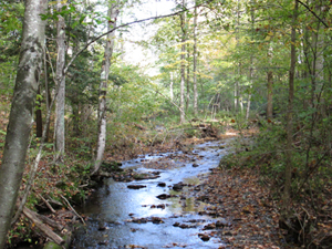 a stream meandering through the woods at Stissing Mountain Multiple Use Area