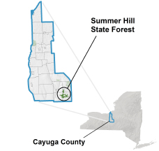 Summer Hill State Forest locator map
