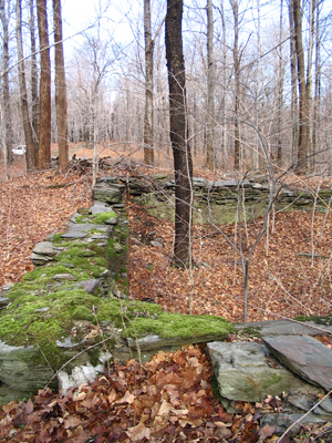 a stone wall in the forest at Taconic Hereford Multiple Use Area