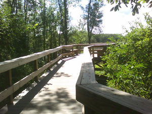 The accessible boardwalk at Three Rivers Wildlife Management Area