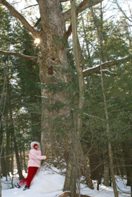 person hugging a tree in the forest