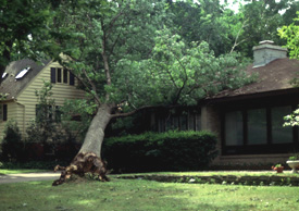 fallen tree on house