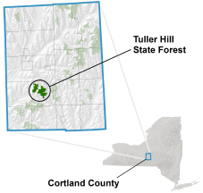 Tuller Hill State Forest