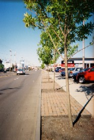 photo of streeet with trees