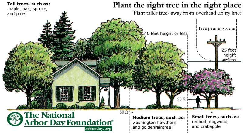 Detailed Planting Instructions
