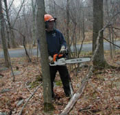Person with chainsaw thinning trees and down limbs in woods near home