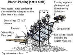 diagram of branch packing (not to scale)