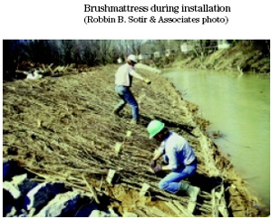 Shoreline Stabilization Techniques Nys Dept Of