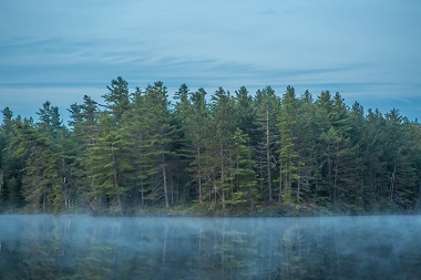 mist over the water with trees in the background
