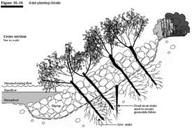 Shoreline stabilization techniques nys dept of environmental figure 16 16 joint planting details nrcs efh chapter 16 solutioingenieria Choice Image