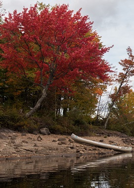 canoe on the shore in fall