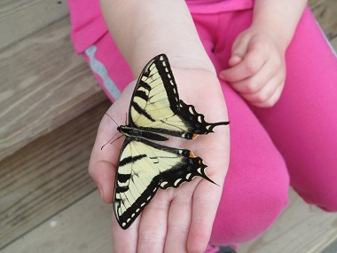 a child holding a butterfly