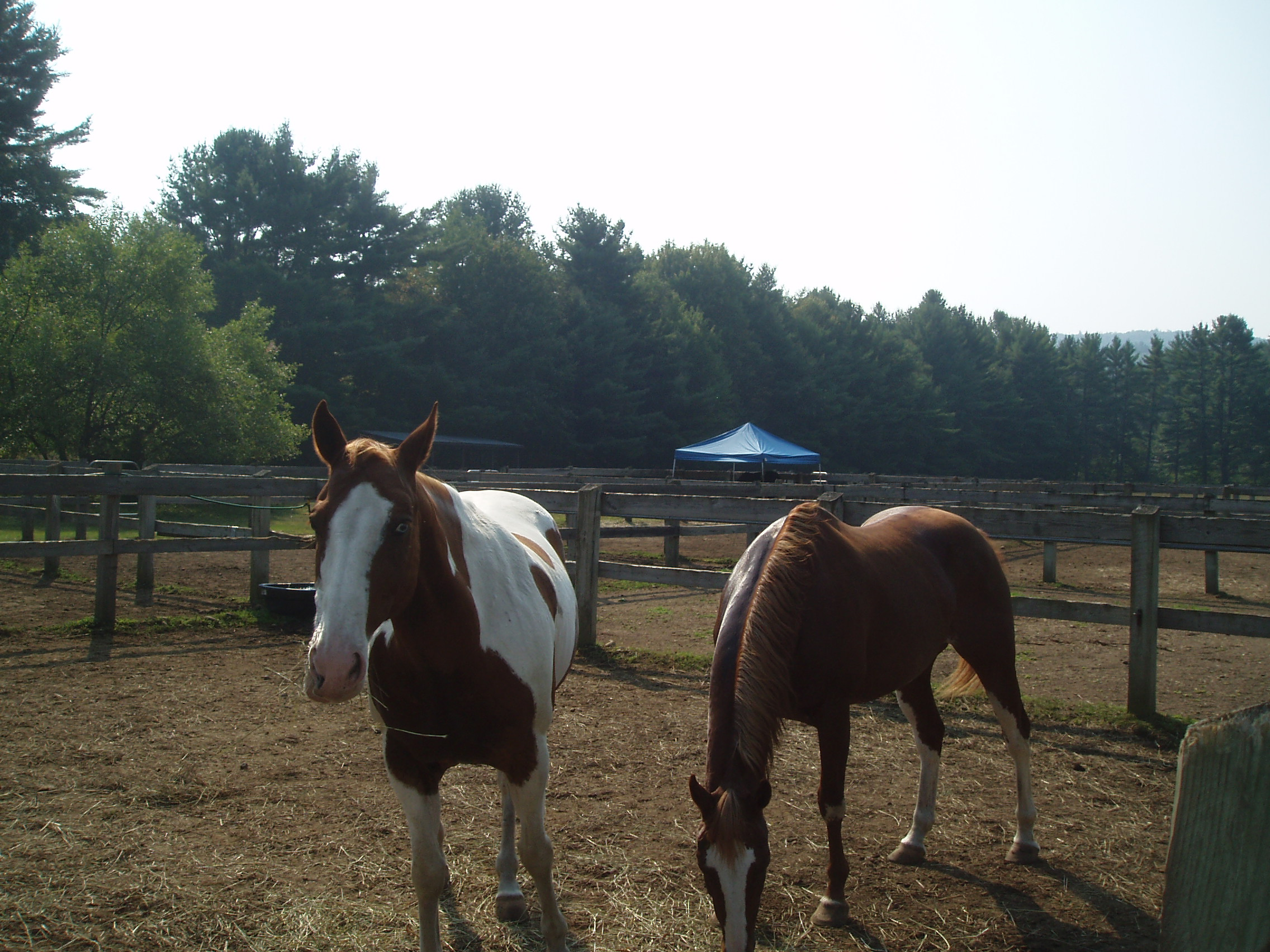 Horses at Luzerne Campground