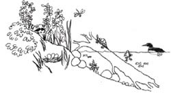 diagram of a natural shoreline with plenty of animals and plants