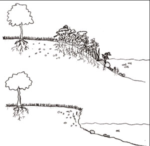 diagram depicting a gently sloping shoreline with vegetation and a steep, eroded shoreline with no vegetation