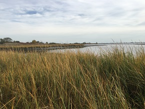 Healthy Salt Marsh