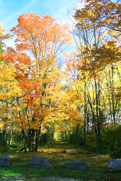 A trail surrounded by fall foliage