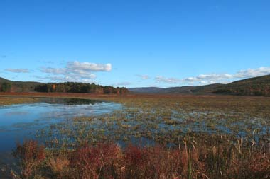 A view across a wetland with open water