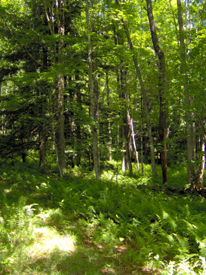 beaver dam state forest in tioga county in region 7