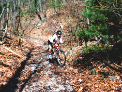 a biker on a wooded mountain trail