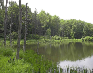 A pond at the end of Jackson Forest Road in Boyce Hill State Forest