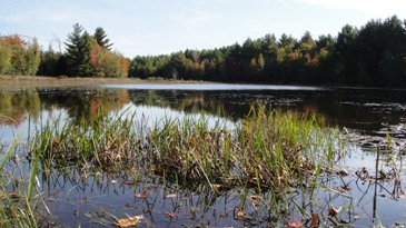 A picture of an open wetland and beaver pond in Buckton State Forest