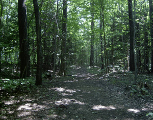 A trail through Cattaraugus State Forest