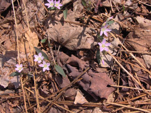 Small flowers at Chateaugay State Forest