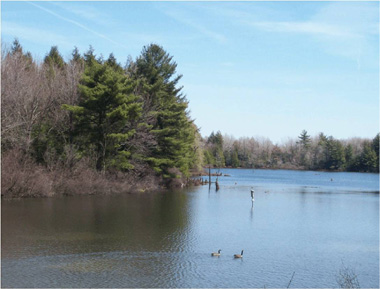 Geese float along the water at Crab Hollow State Forest