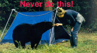 A woman in front of a blue tent, hand-feeds a black bear.