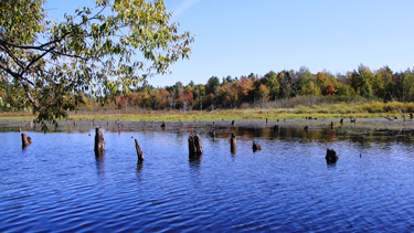 Photgraph of a pond in this state forest