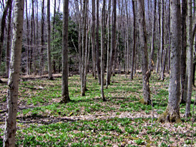 Wooded area in Baker School House State Forest