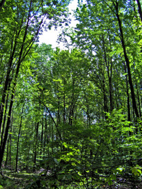 Photo of Trees in Todt Hill Woods