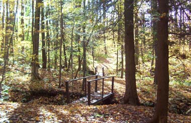 Trail bridge in Harris Hill State Forest