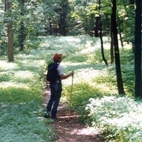 A person hiking on a trail through the woods with flowering groundcovers