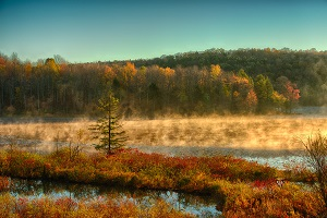 Image of Hunts pond state forest
