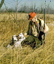Hunter with bird dogs