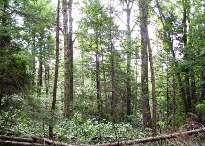 image of trees within Ketchumville State Forest