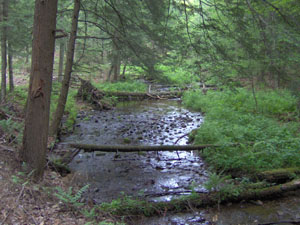 Klondike State Forest in Oswego County