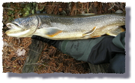 lake trout picture