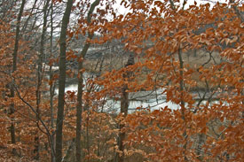 A view of Lemon Creek from between fall foliage