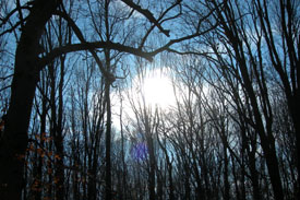 beautiful blue sky through the woods