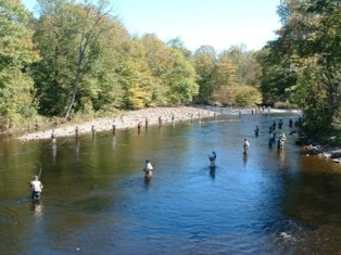 Salmon river nys dept of environmental conservation for Nys fishing seasons