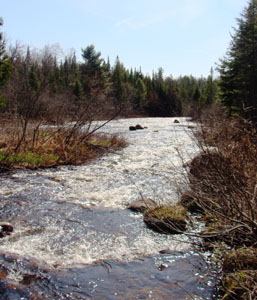 View of the North Branch of the Saranac River