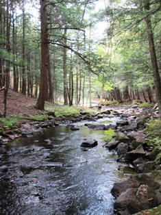 picture of shaded creek