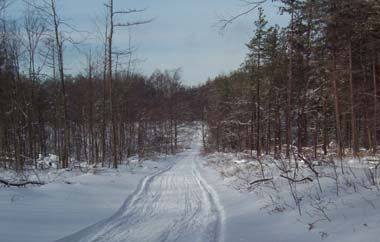 Snowmobile trail within Stockton State Forest