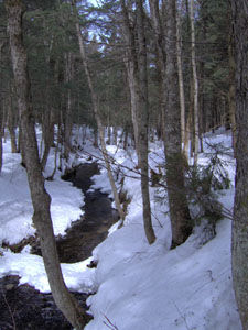creek through snowy woods